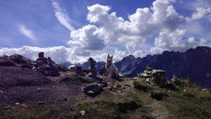Hund zwischen Steinfiguren auf Berg Filzenkopf im Zillertal