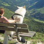 Zillertal Hochfügen Kellerjoch Wanderung Weisser Schweizer Schäferhund Parkbank Aussicht