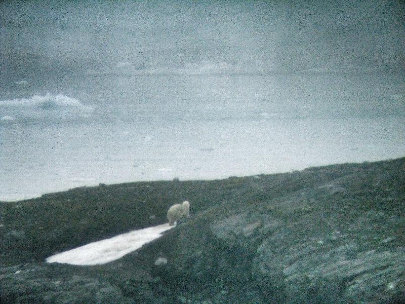 Eisbär am Nordkap, Becci Plessl, Arbeiten am Kreuzfahrtschiff, Wanderhunger, 7 Fragen