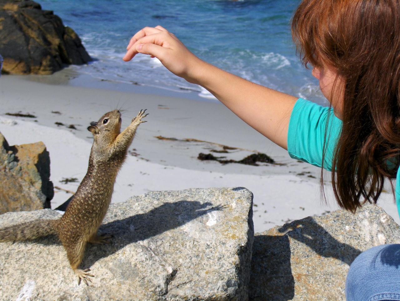 Ein Erdhörnchen streckt sich nach einer Hand auf der Suche nach Futter. Wanderhunger. Von Monterey in's Death Valley