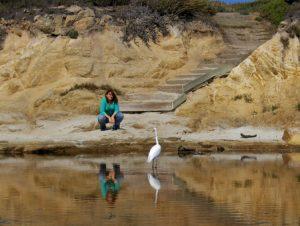Ein Wasservogel, Reiher, an der Küste von Monterey. Wanderhunger. Von Monterey in's Death Valley