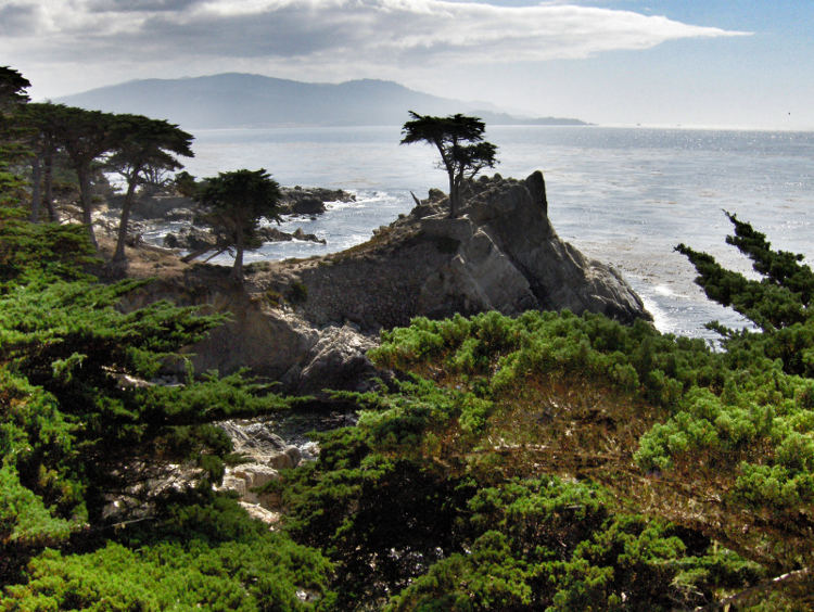 Felsformation mit einsamem Baum an der Küste bei Monterey. Wanderhunger. Von Monterey in's Death Valley