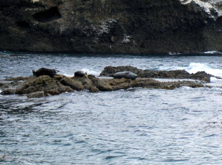 Robben an der Küste bei Monterey. Wanderhunger. Von Monterey in's Death Valley