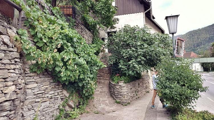 Ein schöner, bewachsener Eingang zu einem Haus in Spitz an der Donau. Wanderhunger