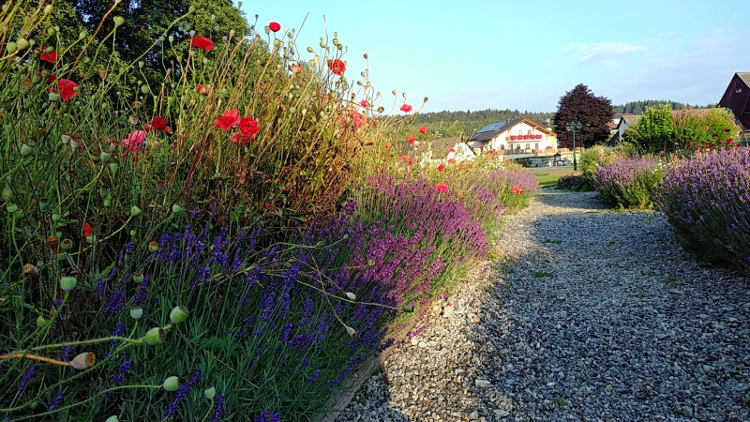 Der schön angelegte Mohngarten im Mohndorf Armschlag im Waldviertel. Wanderhunger