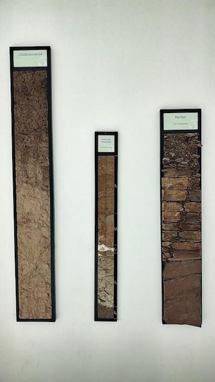 An der Wand des Raums Wein-Region hängen Rahmen mit Erden, auf denen die Reben wachsen. Wanderhunger in der Sandgrube 13 der Winzer Krems.