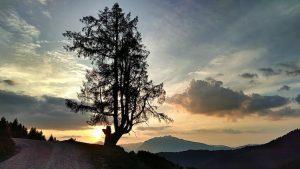 Ein Baum vor dem Abendrot in Großsölk nahe der Schönwetterhütte. Wanderhunger