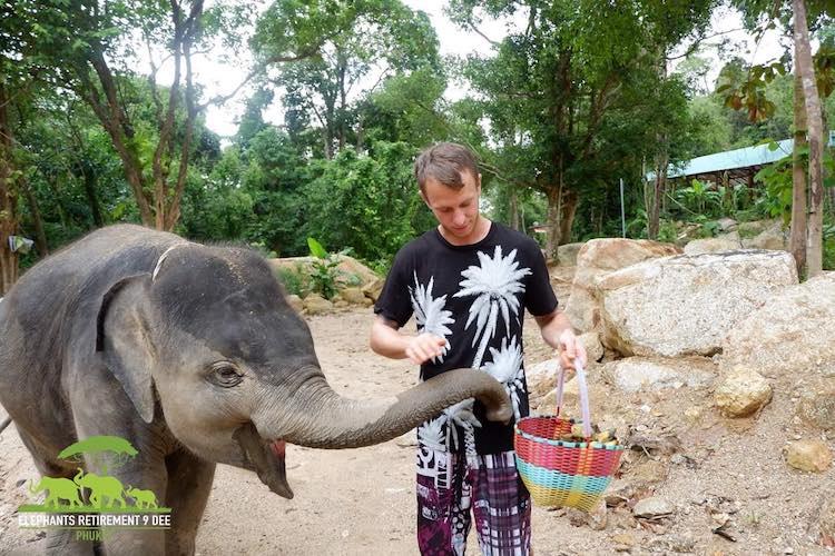 Babyelefant Adel klaut sich Bananen aus dem Futterkörbchen. Elefant Retirement Park 9 Dee, Phuket. Wanderhunger