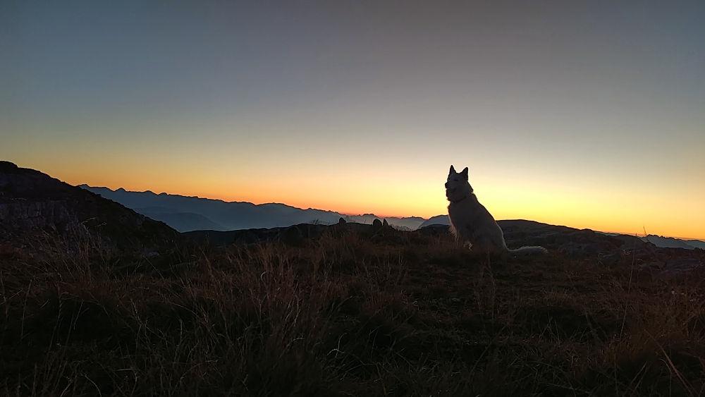 """Weißer Schweizer Schäferhund Rocco von der Stefflsölde auf dem Krippenstein bei Sonnenaufgang. #fopa Kategorie """"Tierisch"""" 2. HJ 2018. Wanderhunger"""