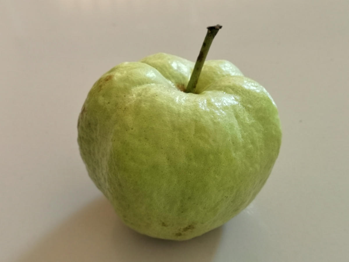 Die Guave hat in Thailand das Aussehen eines großen verschrumpfelten Apfels und einen kräuterähnlichen erfrischenden Geschmack. Wanderhunger