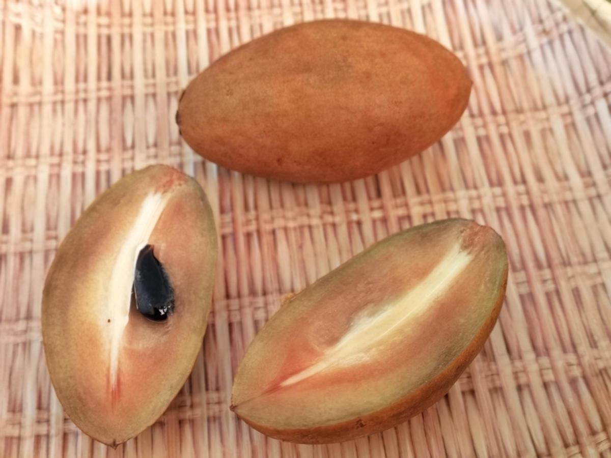 Eine Sapodilla oder Breiapfel, geschlossen und aufgeschnitten. Wanderhunger, Thailands Früchte