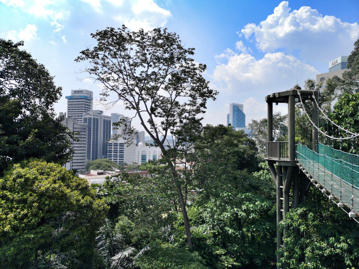 Der KL Forest Eco Park ist ein Urwald mitten in der Großstadt Kuala Lumpur. Während man im Dschungel steht kann man ringsum die Hochhäuser sehen. Wanderhunger