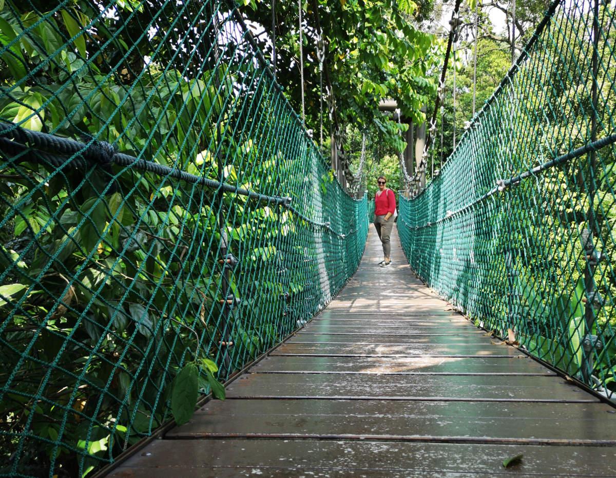 Auf dem sogenannten Canopy Walk im KL Forest Eco Park in Kuala Lumpur spaziert man auf Baumhöhe durch den Urwald. Wanderhunger