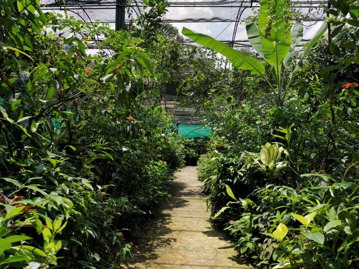 Der Butterflypark Kuala Lumpur bietet nicht nur 5000 Schmetterlinge, die hier leben, sondern ist auch ein wunderschöner tropischer Garten. Wanderhunger